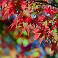 25昭和記念公園【日本庭園:紅葉の様子】22銀塩