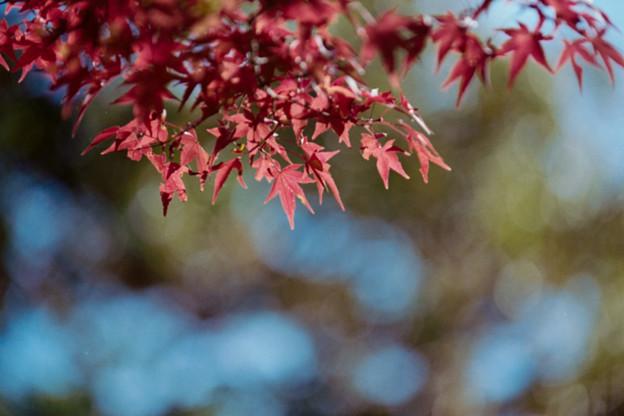 29昭和記念公園【日本庭園:紅葉の様子】26銀塩NLP