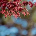 Photos: 29昭和記念公園【日本庭園:紅葉の様子】26銀塩NLP