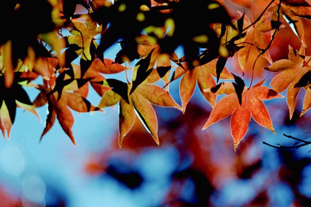 30昭和記念公園【日本庭園:紅葉の様子】27銀塩NLP