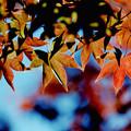 Photos: 30昭和記念公園【日本庭園:紅葉の様子】27銀塩NLP