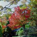 24昭和記念公園【日本庭園:紅葉の様子】21銀塩
