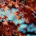 Photos: 27昭和記念公園【日本庭園:紅葉の様子】24銀塩NLP