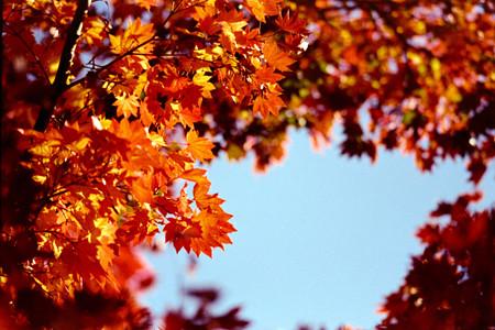 28昭和記念公園【日本庭園:紅葉の様子】25銀塩NLP