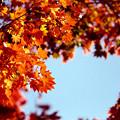 Photos: 28昭和記念公園【日本庭園:紅葉の様子】25銀塩NLP