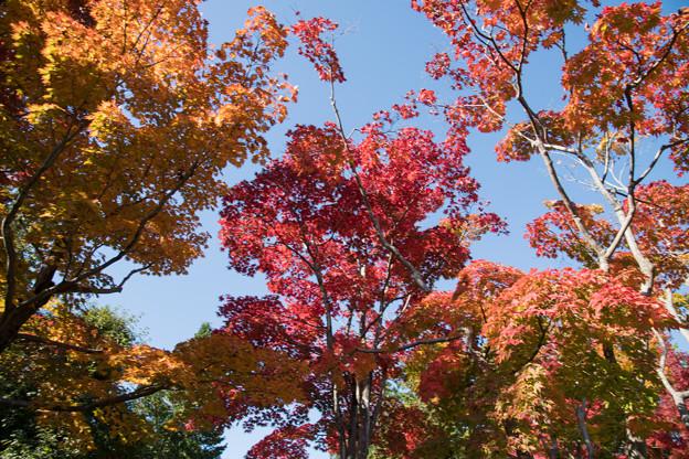 15昭和記念公園【日本庭園:紅葉の様子】04