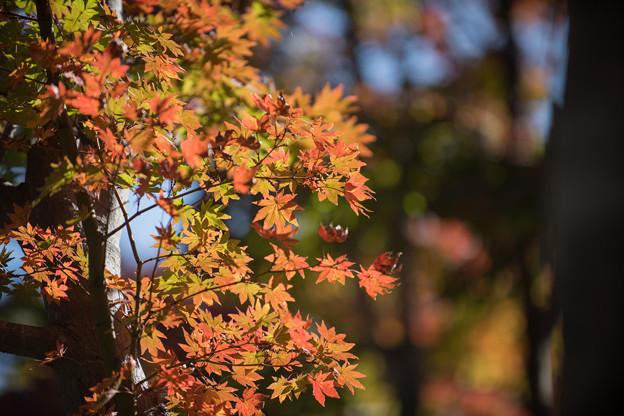 20昭和記念公園【日本庭園:紅葉の様子】13
