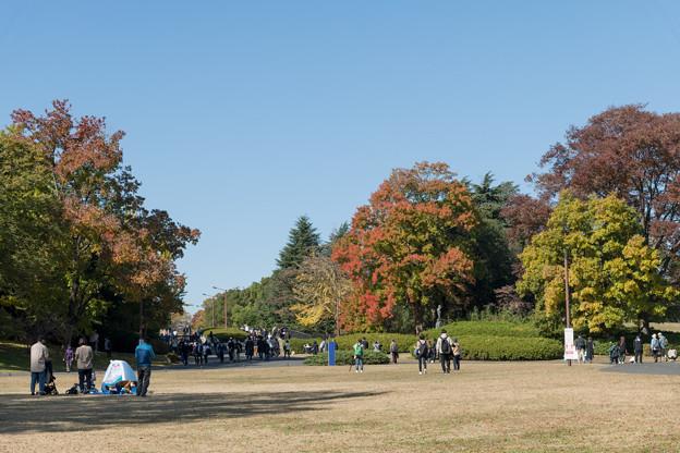 Photos: 38昭和記念公園【ふれあい広場の大木】1