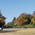 38昭和記念公園【ふれあい広場の大木】1