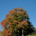 Photos: 39昭和記念公園【ふれあい広場の大木】2