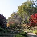03薬師池公園【紅葉の様子】3