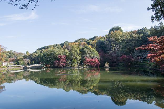 04薬師池公園【薬師池周辺の紅葉】1