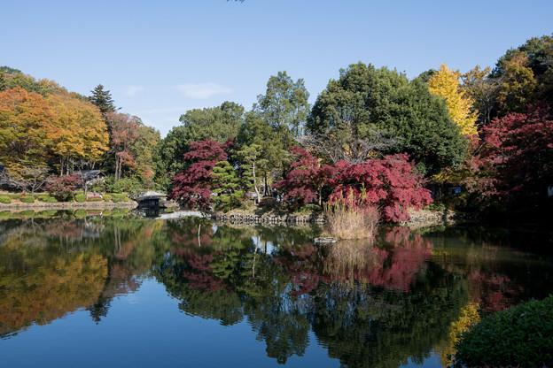 05薬師池公園【薬師池周辺の紅葉】2