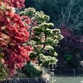 08薬師池公園【薬師池周辺の紅葉】5銀塩NLP