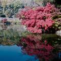 09薬師池公園【薬師池周辺の紅葉】6銀塩NLP