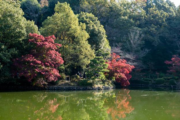 06薬師池公園【薬師池周辺の紅葉】3