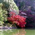07薬師池公園【薬師池周辺の紅葉】4銀塩