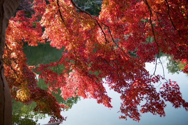 11薬師池公園【薬師池周辺の紅葉】8