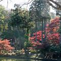 Photos: 15薬師池公園【菖蒲田右側の紅葉】13