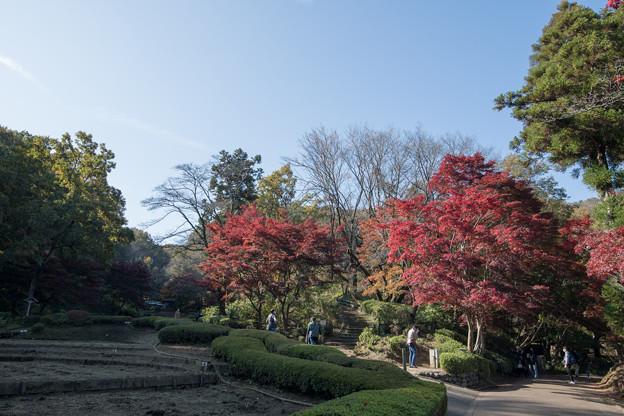 Photos: 13薬師池公園【菖蒲田右側の紅葉】11