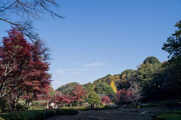 14薬師池公園【菖蒲田右側の紅葉】12