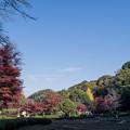 Photos: 14薬師池公園【菖蒲田右側の紅葉】12