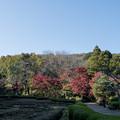 12薬師池公園【菖蒲田右側の紅葉】10