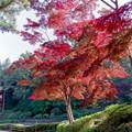 Photos: 16薬師池公園【菖蒲田右側の紅葉】14銀塩