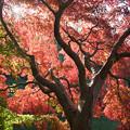 10薬師池公園【薬師池周辺の紅葉】7