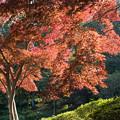 Photos: 18薬師池公園【菖蒲田右側の紅葉】20
