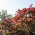 28薬師池公園【旧荻野家周辺の紅葉】3