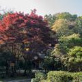 27薬師池公園【旧荻野家周辺の紅葉】2