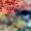 Photos: 23薬師池公園【菖蒲田右側の紅葉】25銀塩