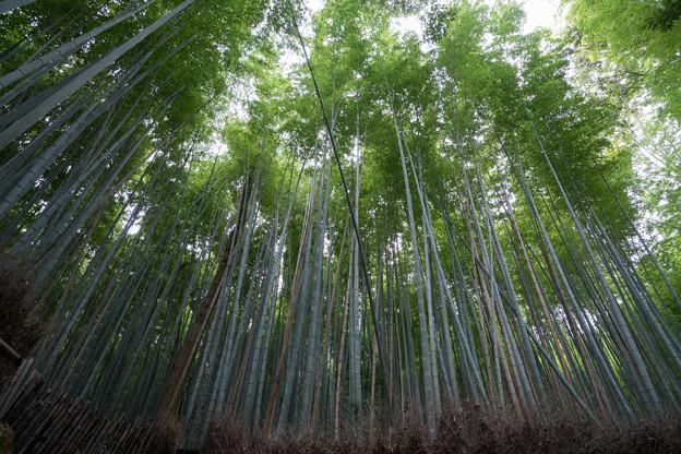 20京都紅葉狩り【竹林の道】1
