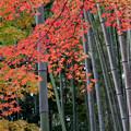 Photos: 35京都紅葉狩り【北野天満宮:紅葉】4