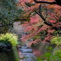 Photos: 34京都紅葉狩り【北野天満宮:紅葉】3