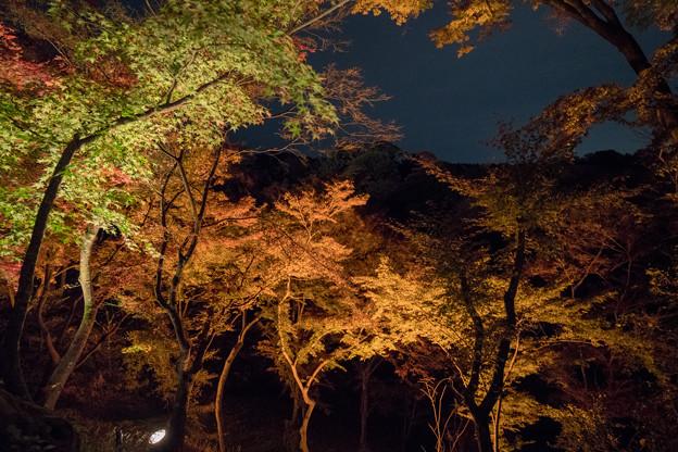 40京都紅葉狩り【清水寺:紅葉】2