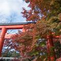 43京都紅葉狩り【下鴨神社:紅葉】1