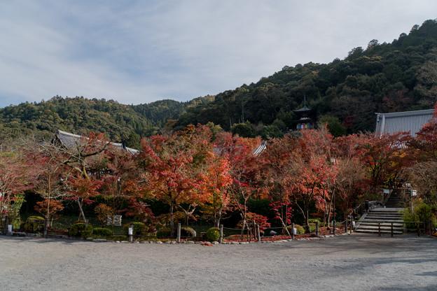 04京都の紅葉【永観堂:多宝塔付近】2