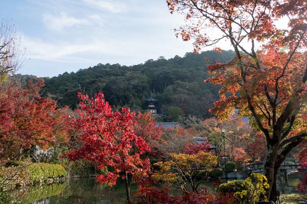 06京都の紅葉【永観堂:多宝塔付近】4