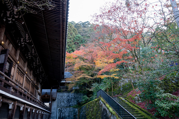 13京都の紅葉【永観堂:御影堂付近】5