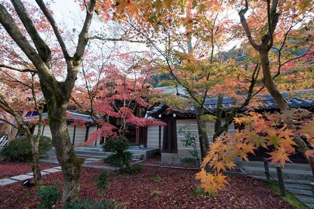 18京都の紅葉【永観堂:唐門付近】3
