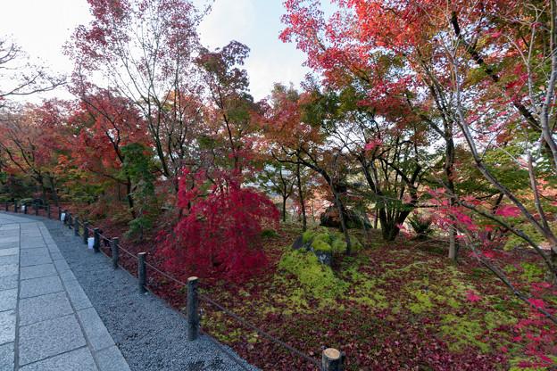 20京都の紅葉【永観堂:唐門付近】5