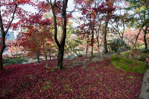 21京都の紅葉【永観堂:唐門付近】6