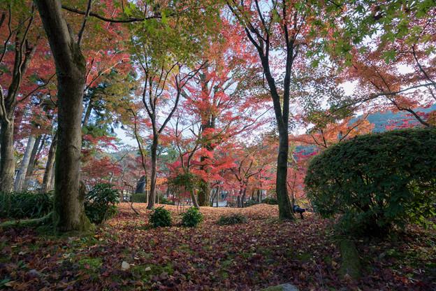 25京都の紅葉【永観堂:寿橋西の庭付近】1