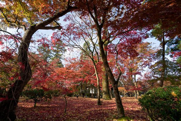 26京都の紅葉【永観堂:寿橋西の庭付近】2