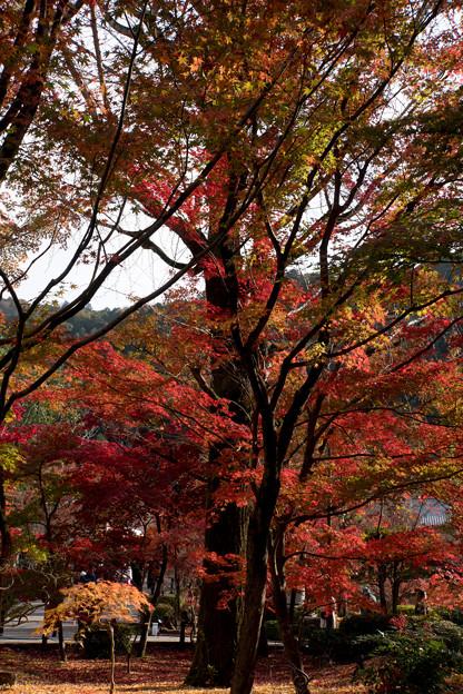 29京都の紅葉【永観堂:寿橋西の庭付近】5