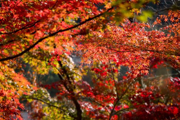 30京都の紅葉【永観堂:寿橋西の庭付近】6