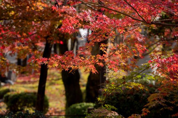 31京都の紅葉【永観堂:寿橋西の庭付近】7