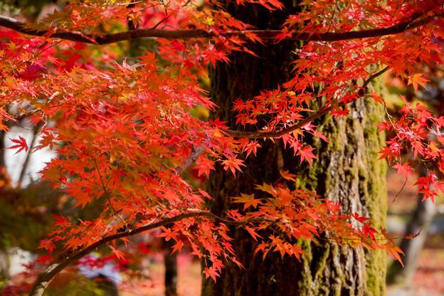 32京都の紅葉【永観堂:寿橋西の庭付近】8